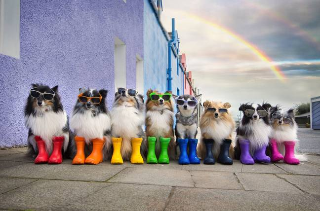 The dogs appearing to wear wellingtons is seriously cute (Credit: Kaylee Garrick)