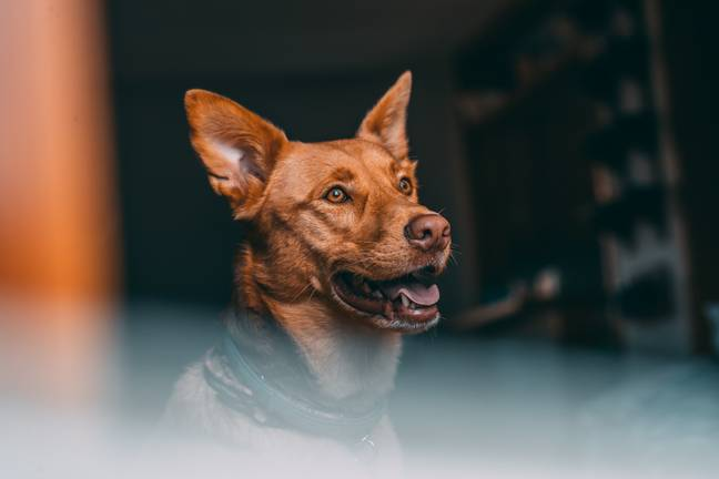 Picturehouse Cinemas have organised a dog-friendly screening next month. (Credit: Unsplash)