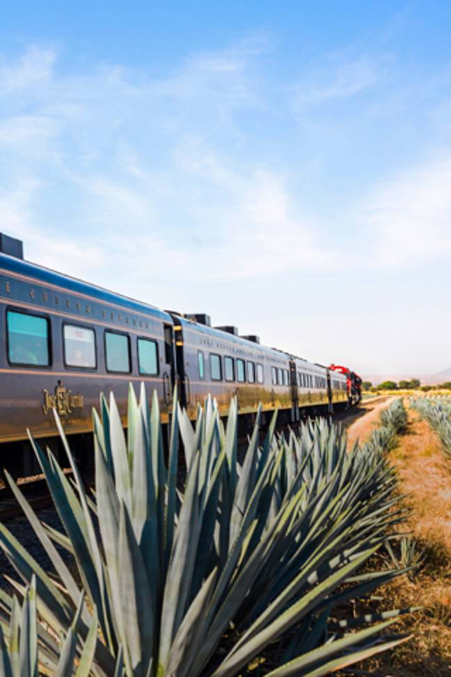 The Jose Cuervo Express tour is one of the most famous tequila tours in the area (Credit: Jose Cuervo Express)