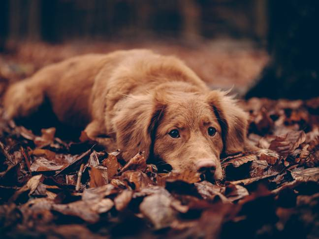 Dogs test the bonds with their owners in adolescence (Credit: Unsplash)