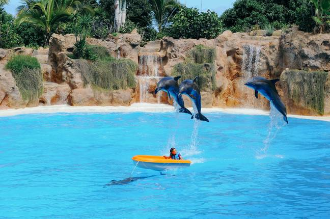 The new laws will ban dolphin shows (Credit: Unsplash)