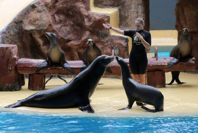 Loro Parque will also be affected Credit: PA