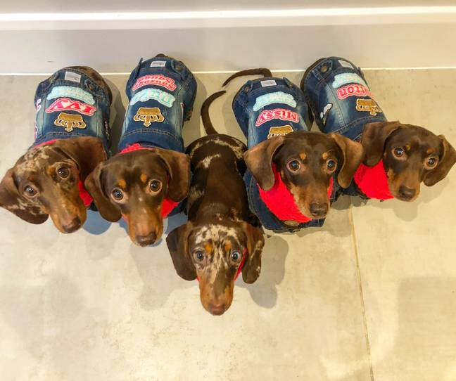 The dogs are spoilt with clothes and treats (Credit: Caters)