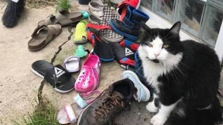 Mortified Owner Discovers 'Kleptomaniac' Cat Has Stolen Hundreds Of Neighbours' Shoes
