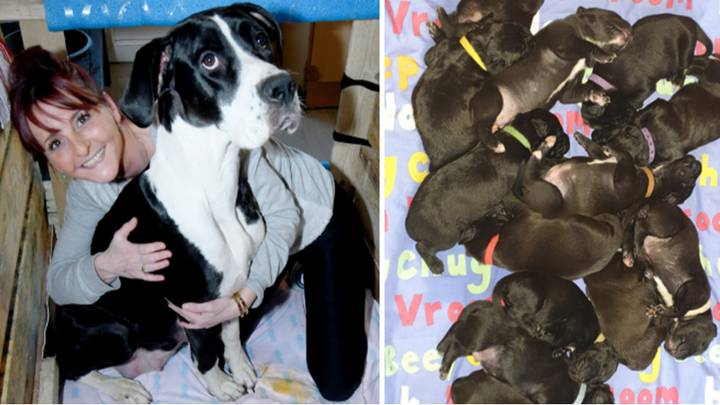 British Dog Breaks World Record After Giving Birth To 21 Puppies