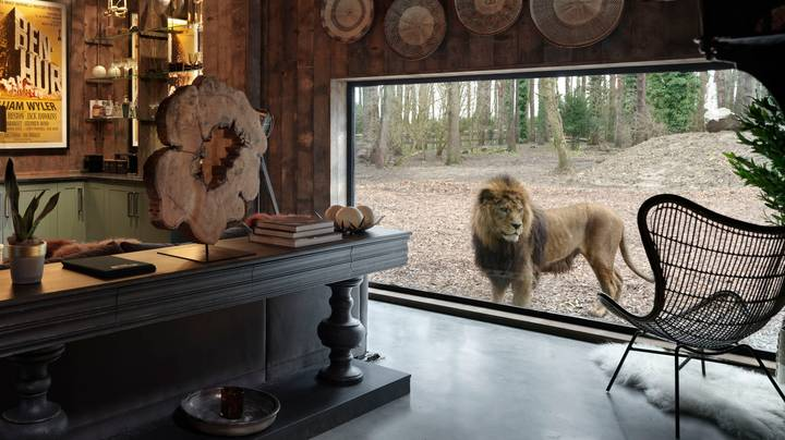 You Can Literally Stay With Lions In This Amazing UK Lodge