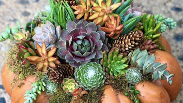 Succulent Pumpkins Are The Cutest Halloween Trend To Try At Home