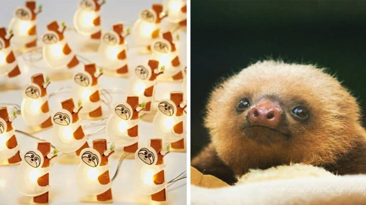 B&M Is Selling Adorable Sloth Lights And They're The Perfect Secret Santa Gift