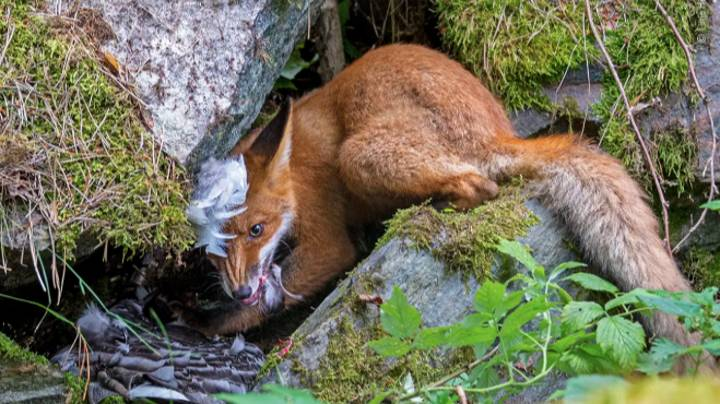 These Wildlife Photographer Of The Year Pics Will Brighten Your Day