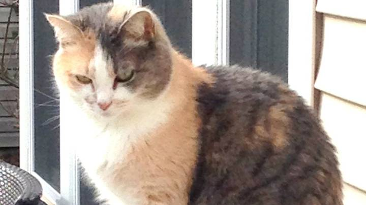 Family Accidentally Buried Someone Else's Pet Thinking It's Their Family Cat