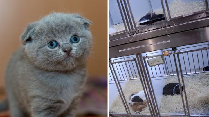Pet Shops Will Be Banned From Selling Puppies and Kittens To Stop Immoral Breeding Practices