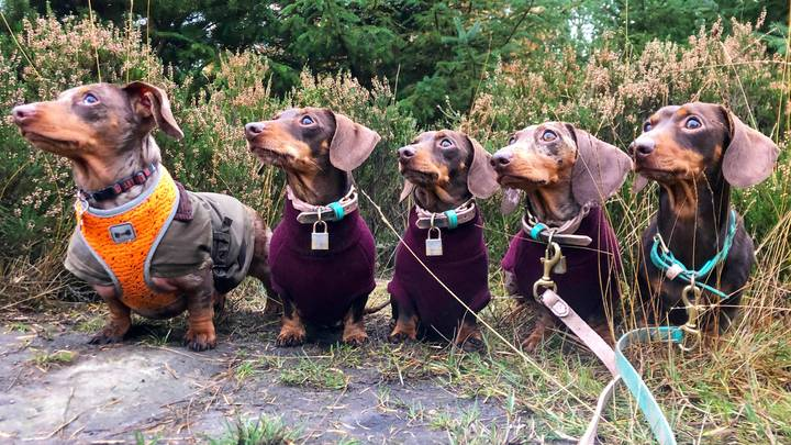 This Sausage Squad Is So Sassy It Is Now Insta-Famous