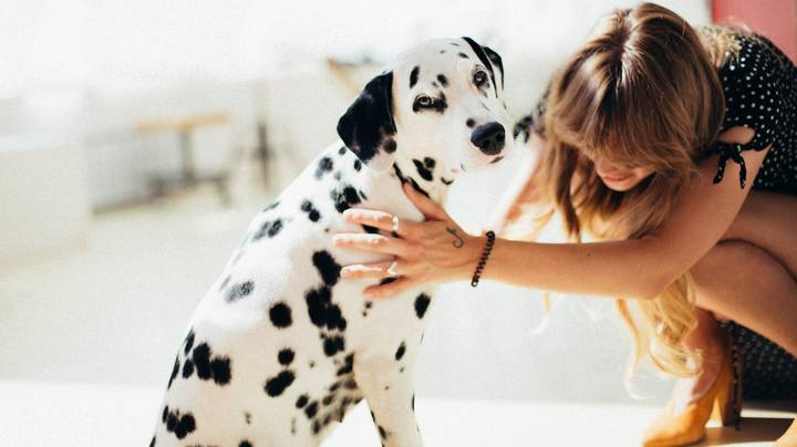 Research Suggests We Mourn Dogs In The Same Way We Do Humans
