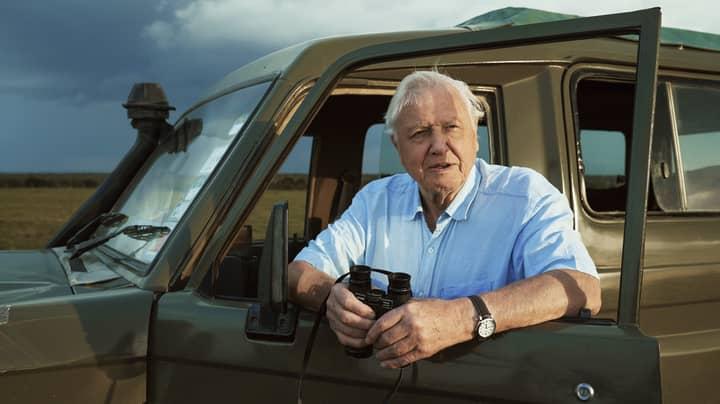 David Attenborough Waited 50 Years To Film Rare Monkeys In New Docuseries