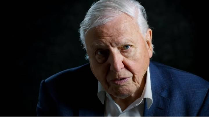 Netflix's 'David Attenborough: A Life On Our Planet' Is Coming