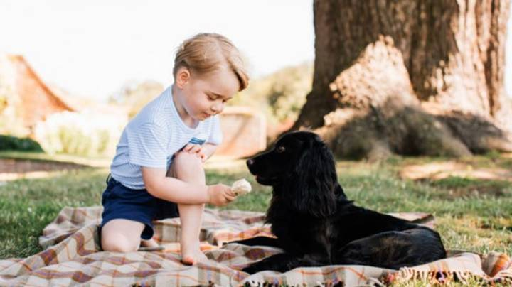 Prince William And Kate Pay Tribute As 'Heart Of The Family' Dog Lupo Dies