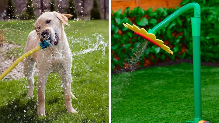 Dog Owners Love This Sunflower Hose Attachment For Their Pooch