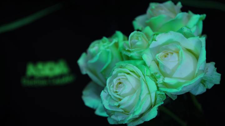 ASDA Is Selling Glow-In-The-Dark Roses For Halloween