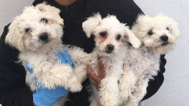 Puppies Found Covered In Oil After Being Illegally Imported Into The UK