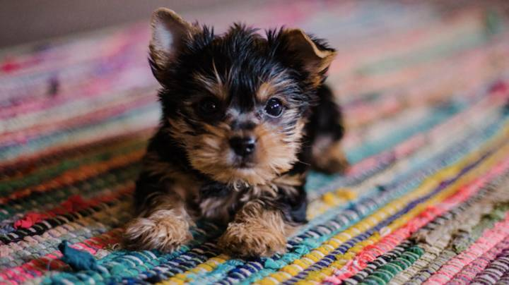 You Can Now Get Paid To Look At Pictures Of Puppies
