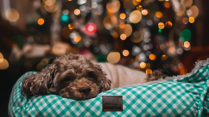 Experts Warn Against Feeding Your Dog Leftover Christmas Dinner