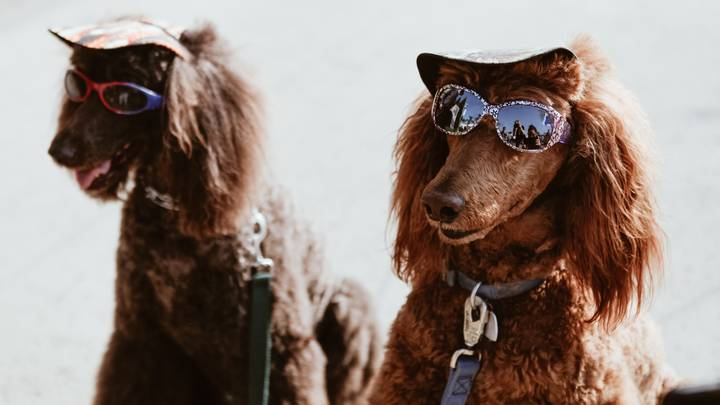 An Entire Festival Devoted To Dogs Is Coming To London And It Sounds Extra Af