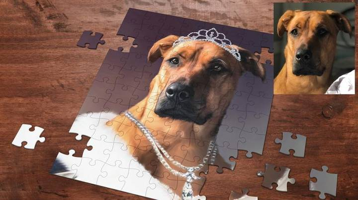 You Can Now Get Jigsaw Puzzles Of Your Dog From ZK Portraits Workshop