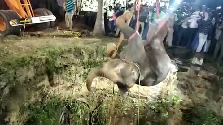 Elephant Pulled From Deep Well In 16 Hour Rescue Mission