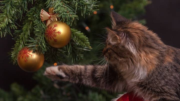 You Can Buy Christmas Tree Beds For Your Cat