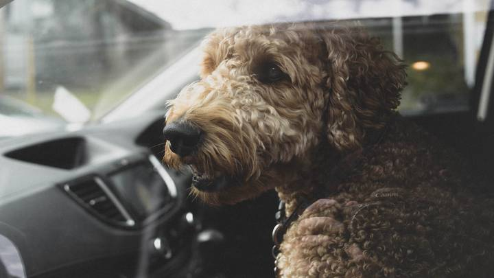 Charities Share Urgent Warning About Leaving Dogs In Cars