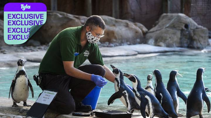 EXCLUSIVE: Chester, London And Bristol Zoos Denied Government Support