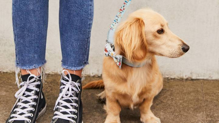 Cath Kidston Is Looking For Dogs To Model Its Latest Collection