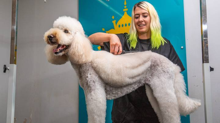 You Can Now Give Your Dog 'Angel Wings' In Stunning Grooming Trend