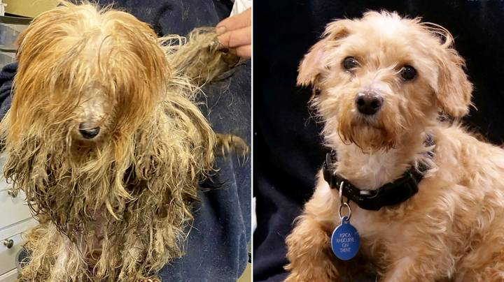 Heartwarming Pics Show Rescue Dogs' Incredible Transformations