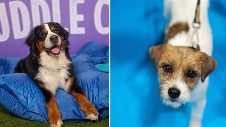 A Doggy Cuddle Corner Will Be In London This Weekend