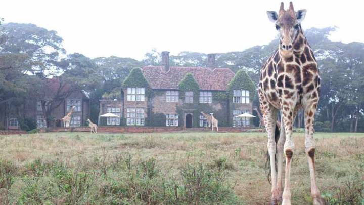 You Can Now Stay In The Middle Of A Giraffe Sanctuary