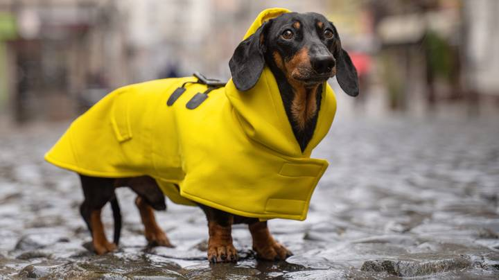 Primark Is Now Selling Adorable Rain Coats For Your Dog - Including Winnie The Pooh Jackets
