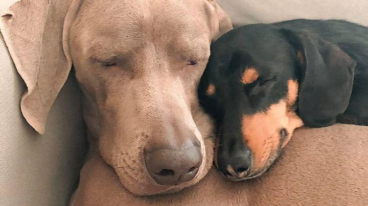 Traumatised Dog Who Was Attacked Overcomes Anxiety With The Help Of His New Best Friend