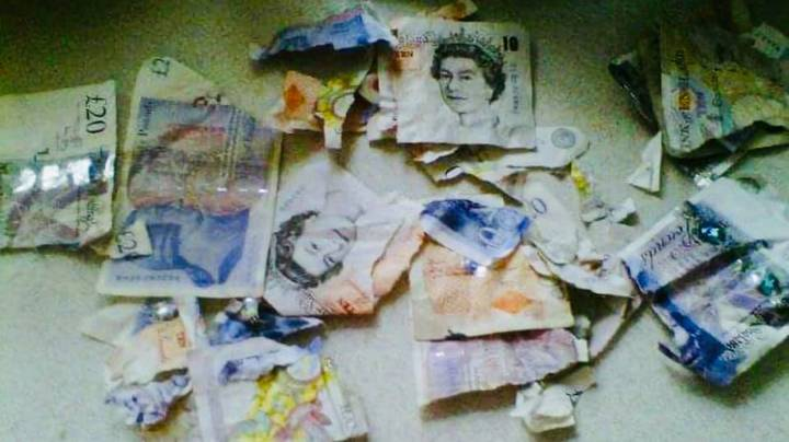 Woman Left Distraught After Naughty Pup Chewed Up £250 Worth Of Bank Notes