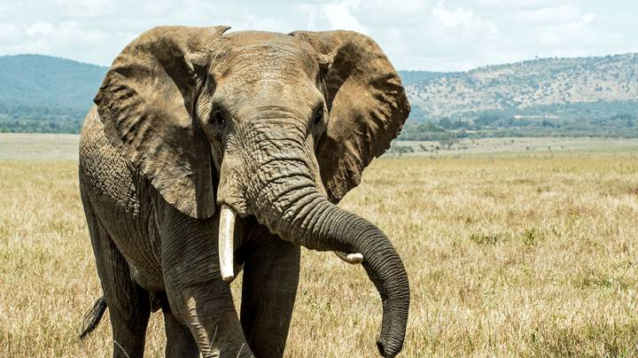 Hunter Who Killed 1,300 Elephants Claims That They'll Soon Be Extinct