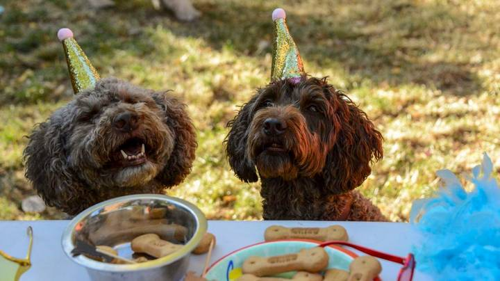 This Woman Is A Full-Time Party Planner For Dogs And It's The Dream