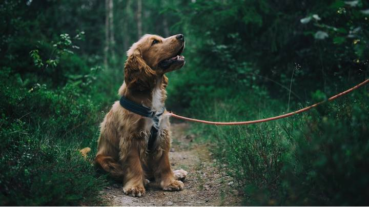 Less Than Half Of Dogs Get Walked Daily, Study Finds