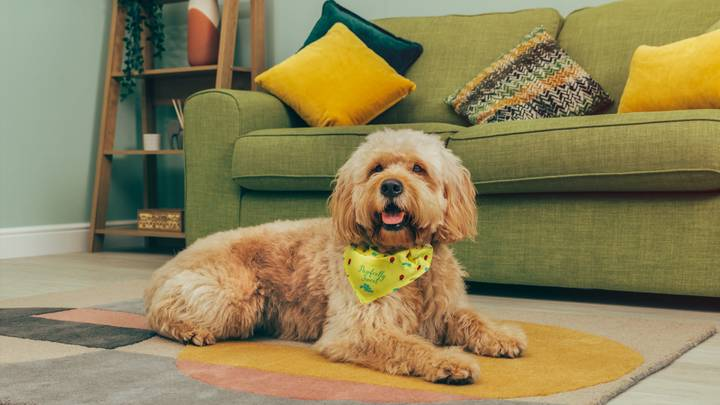 Pets At Home Launches Spa Package For Dogs, Including Luxury Blueberry Facial
