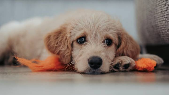 More Than A Third Of Dogs Adopted In Pandemic Have Never Been To The Park