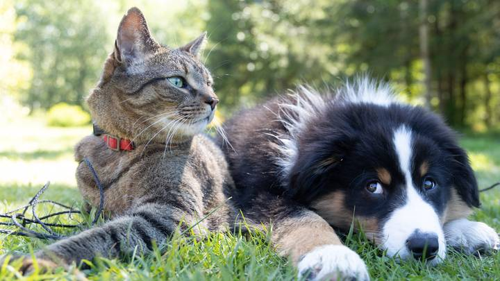New Study Confirms Pet Owners Can Pass On Covid To Cats And Dogs