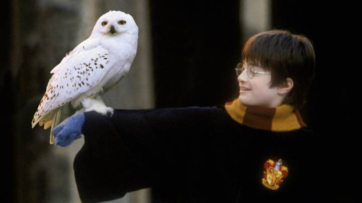 Someone Rewrote Harry Potter So Hedwig The Owl Doesn't Die