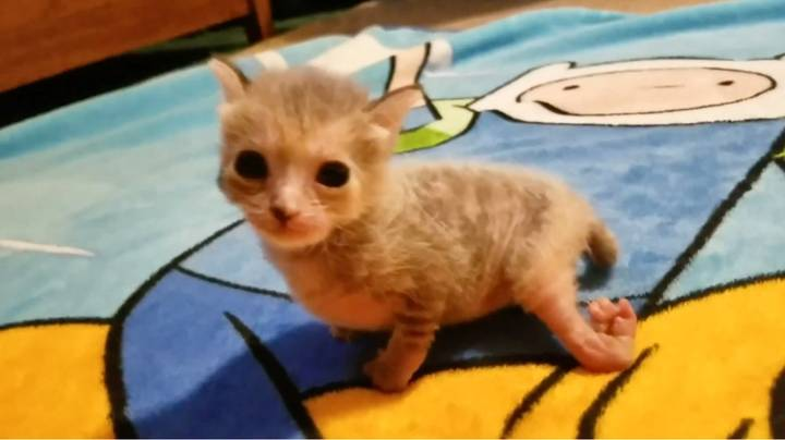 Couple Adopt Adorable Kitty With Mystery Condition