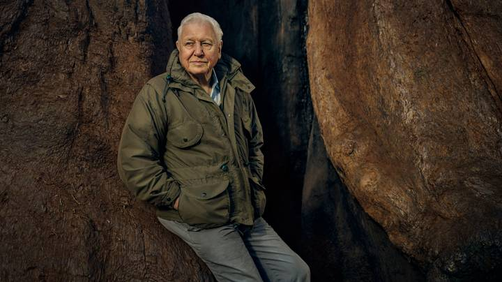 David Attenborough Has A New Nature Series Coming