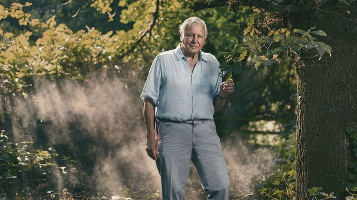 David Attenborough's New BBC Doc 'Extinction: The Facts' Drops On Sunday