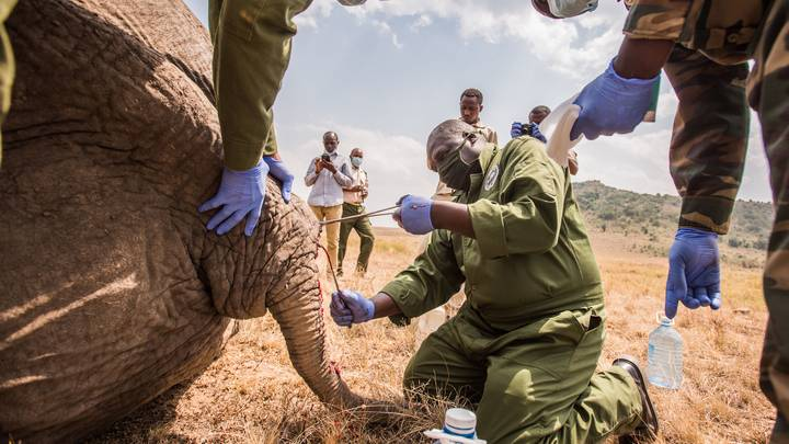 Dramatic Moment Vets Save Elephant's Life In Kenya After It Was Speared